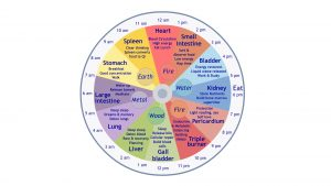 24-Hour clock that shows which organs relate to each hour of the day