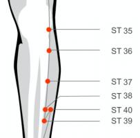 Stomach 36 acupressure point