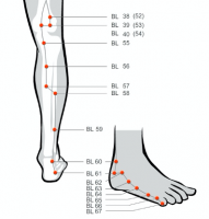 Urinary bladder acupressure points Bladder 40 and 62 for headaches Bladder 62 for yang deficiency and Bladder 57 for hot constitution
