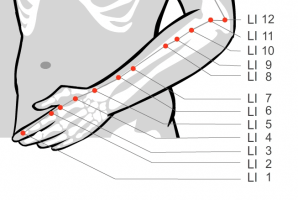 Large Intestine 1 to 12 acupressure points
